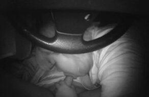Cerda le hace una mamada a su amante en el coche